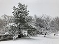 2018-03-21 12 29 41 Snow-covered trees and bushes along a walking path in the Franklin Glen section of Chantilly, Fairfax County, Virginia.jpg