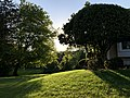 2020-05-15 18 52 54 Sunlit lawn and trees in the evening along Ladybank Lane in the Chantilly Highlands section of Oak Hill, Fairfax County, Virginia.jpg
