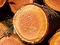 2021-02-20 11-08-50 forêt.jpg