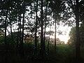 2645 Delfgauw, Netherlands - panoramio.jpg