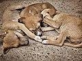 3 Puppies.jpg