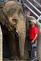 50 Jahre Knie's Kinderzoo - Elephas maximus 2012-10-03 15-34-46.JPG
