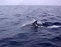 Açores 2010-07-21 (5113118899).jpg