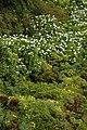 Açores 2010-07-23 (5160109441).jpg