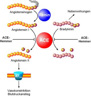 ace 2 rezeptoren