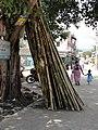 A Bamboo pole mart.JPG