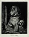 A bloodhound and a Scotch terrier sitting in a kennel and lo Wellcome V0020849.jpg