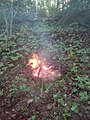A bonfire in the wood. 02.jpg