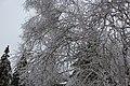 A canopy of ice (11507534946).jpg