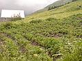 A farmhouse in the village of Kazbegi.jpg