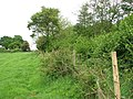 A field-woodland boundary - geograph.org.uk - 1323831.jpg