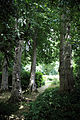 A group of trees with hedging Gibberd Garden Essex England 02.JPG