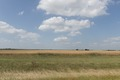 A hay or wheat field in Robertston County, southeast of Waco, Texas LCCN2014632026.tif