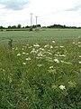 A large wheat field - geograph.org.uk - 1362293.jpg