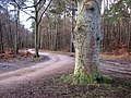 A much carved-up tree - geograph.org.uk - 1709679.jpg