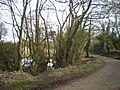 A small pond beside the track - geograph.org.uk - 1759315.jpg