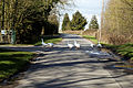 Abbess Roding domestic Emden geese - Essex England 01.jpg