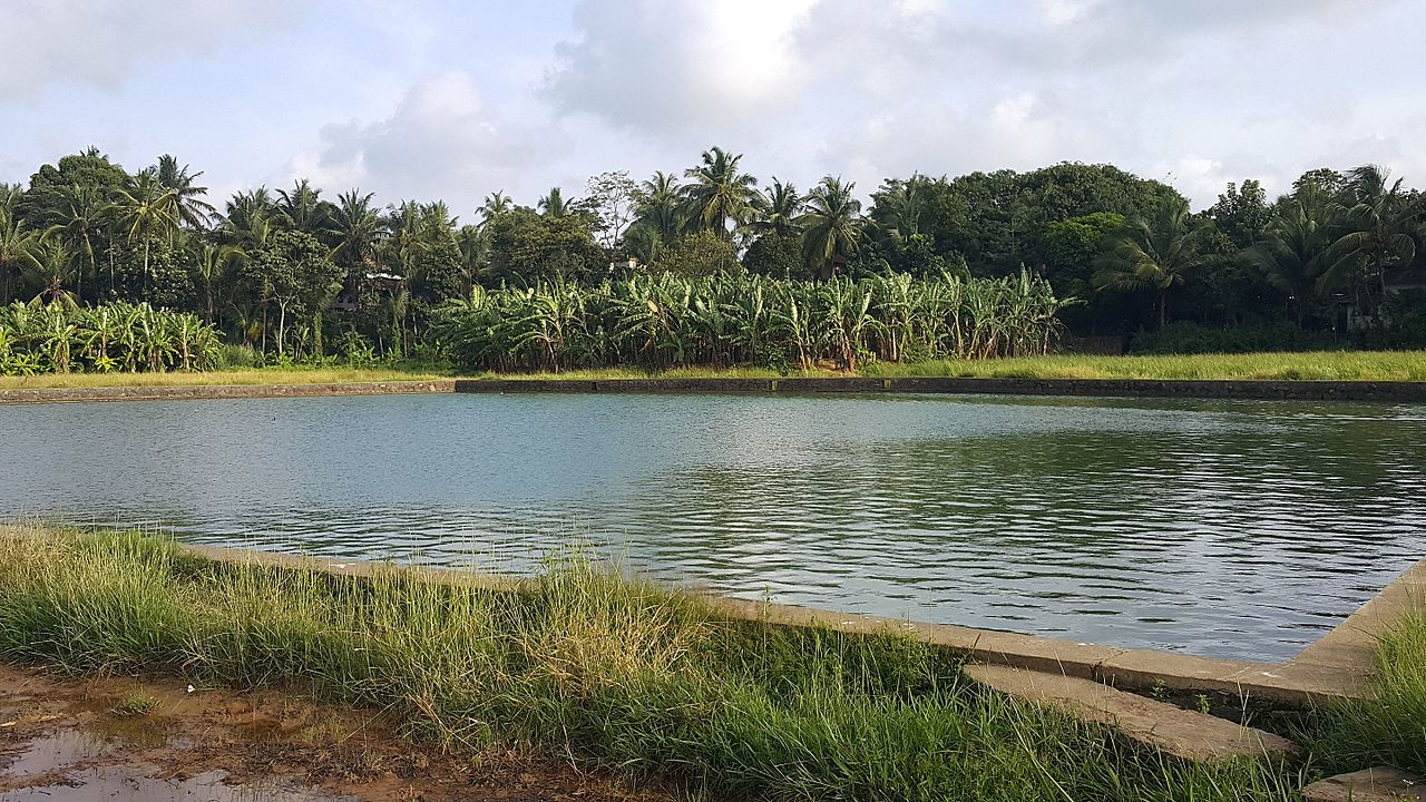 file acre pond  kilinakkode jpg