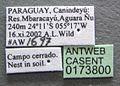 Acromyrmex nigrosetosus casent0173800 label 1.jpg