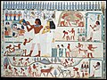 Agricultural Scenes, Tomb of Nakht MET DT306954.jpg
