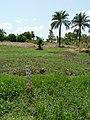 Agriculture in inland valleys in Benin - panoramio (22).jpg