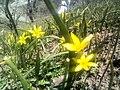 Alpine flowers4.jpg