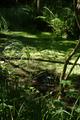 Alsfeld Eifa LPA 378405 Auenverbund Schwalm Swamp det.png