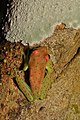 Amphibians (15541805636).jpg
