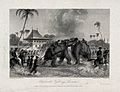 An elephant fight in Lucknow, Uttar Pradesh, watched by crow Wellcome V0021547.jpg