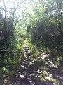 Ancienne route plaine des palmistes - panoramio.jpg