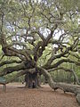 Angel Oak April 2005.jpg