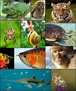From left to right starting top-left: a Australian Green Tree Frog, Tawny Owl, Siberian Tiger, European garden spider, White-lipped snail, Green Sea Turtle, Solitary bee, Asian arowana, Barbary Macaque, Sawfish and a Marbled White (butterfly).