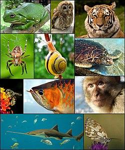vad betyder djur