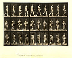 Animal locomotion. Plate 16 (Boston Public Library).jpg