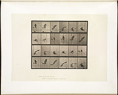 Animal locomotion. Plate 763 (Boston Public Library).jpg