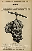Annual report of the Fruit Growers' Association of Ontario, 1900 (1901) (14765473982).jpg