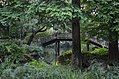 Another humped bridge, in a delightfully shady setting (36474600321).jpg