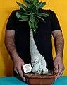 Arabflower.jpg