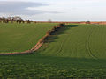 Arable farmland on the Lambourn Downs - geograph.org.uk - 314014.jpg