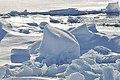 Arctic Ice (4370262641).jpg