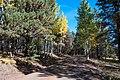 Around the Peaks Loop Hart Prarie Road (21805960511).jpg