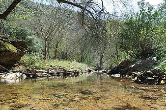 Arroyo de Guadalora.JPG