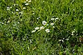 Art Ladislav Kopunec Univerzon Natura Photo oriiginal Nature 25763 Czech grammar - Ladislav Kopůnec, English grammar - Ladislav Kopunec.jpg