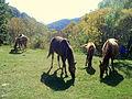 Arzakan, Horses.JPG