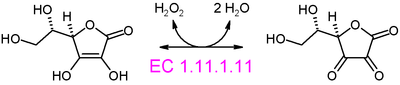 Ascorbate peroxidase reaction.PNG