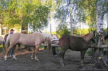 Horse breeding - Wikipedia