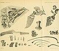 Atti della Societitaliana di scienze naturali e del Museo civico di storia naturale di Milano (1902) (20339884442).jpg