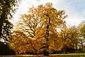 Autumn At Stourhead (10900404074).jpg