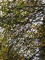 Autumn Collage (3020419527).jpg