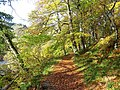Autumn Leaves on the Banks of the Allen - geograph.org.uk - 378577.jpg